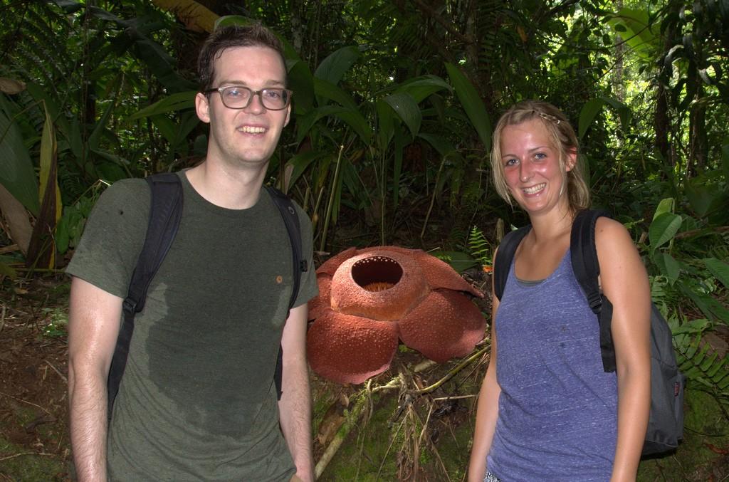 Bezweet voor de Rafflesia Flower