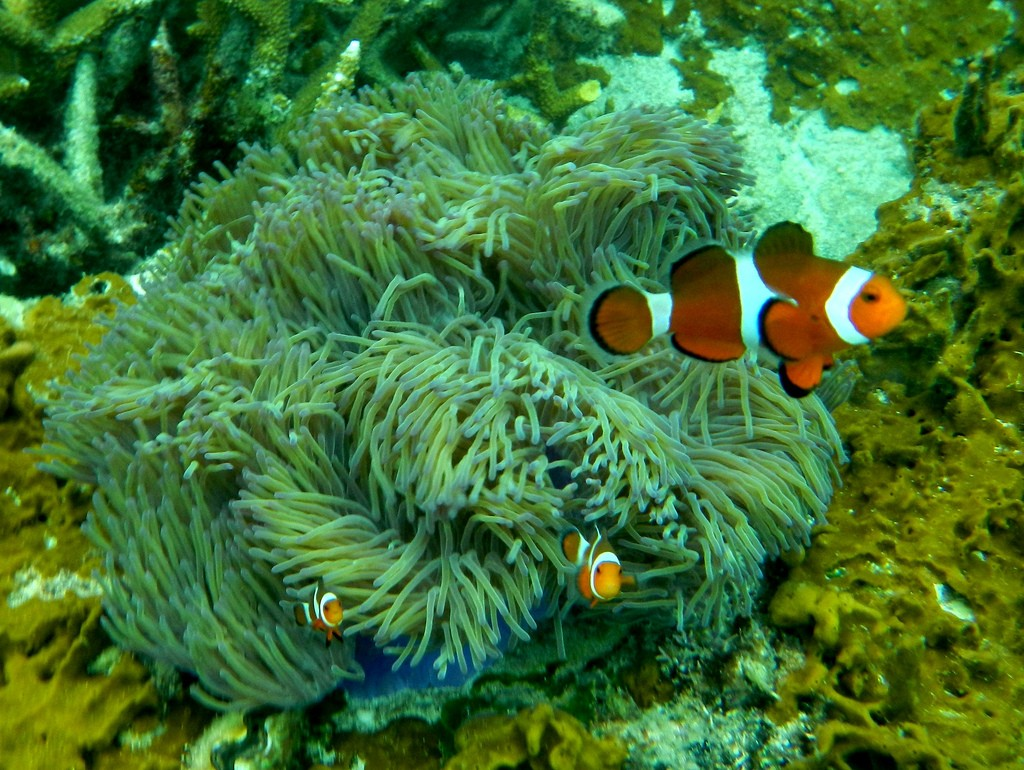 Snorkelen Maleisië Finding Nemo