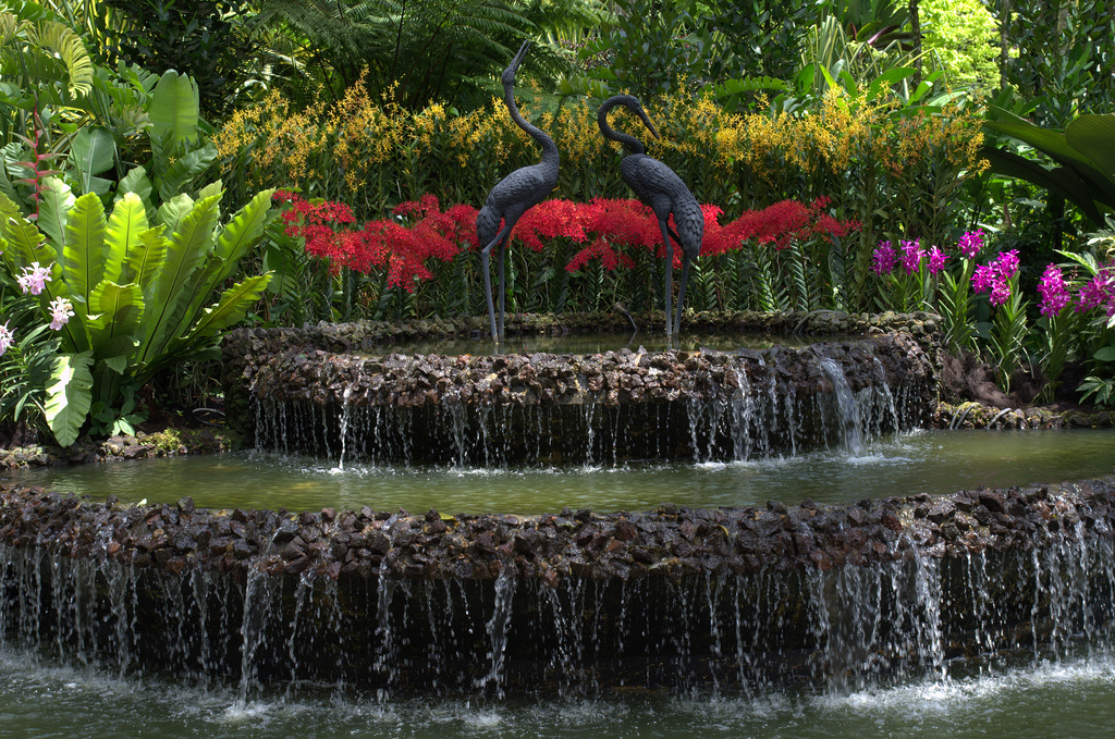 Fountain in Orchid Garden