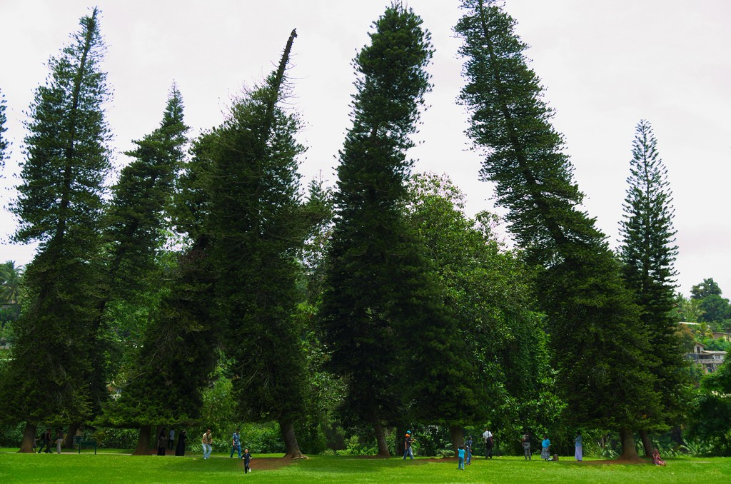 Funny shaped trees