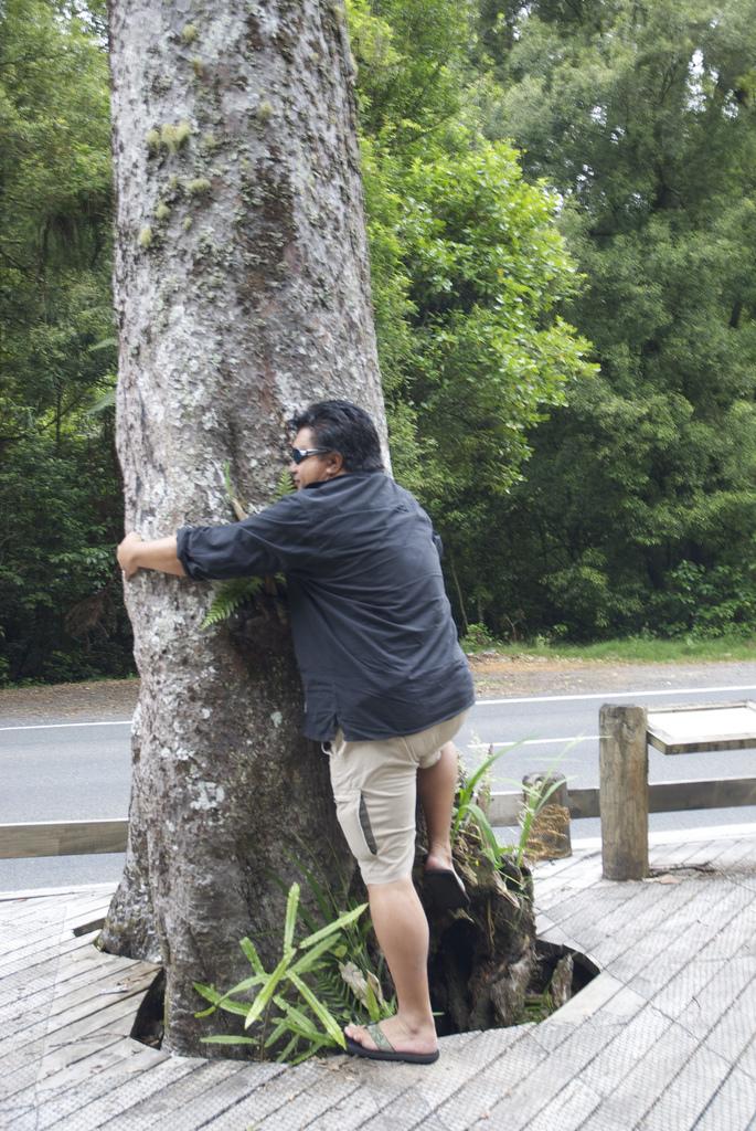 Gids & tree hugger