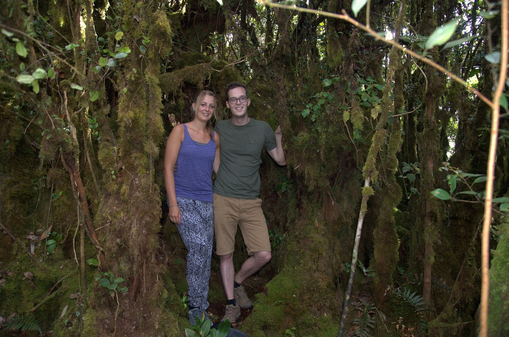In het 'mossy forest'