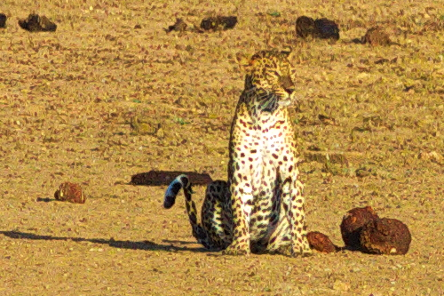 Leopard close