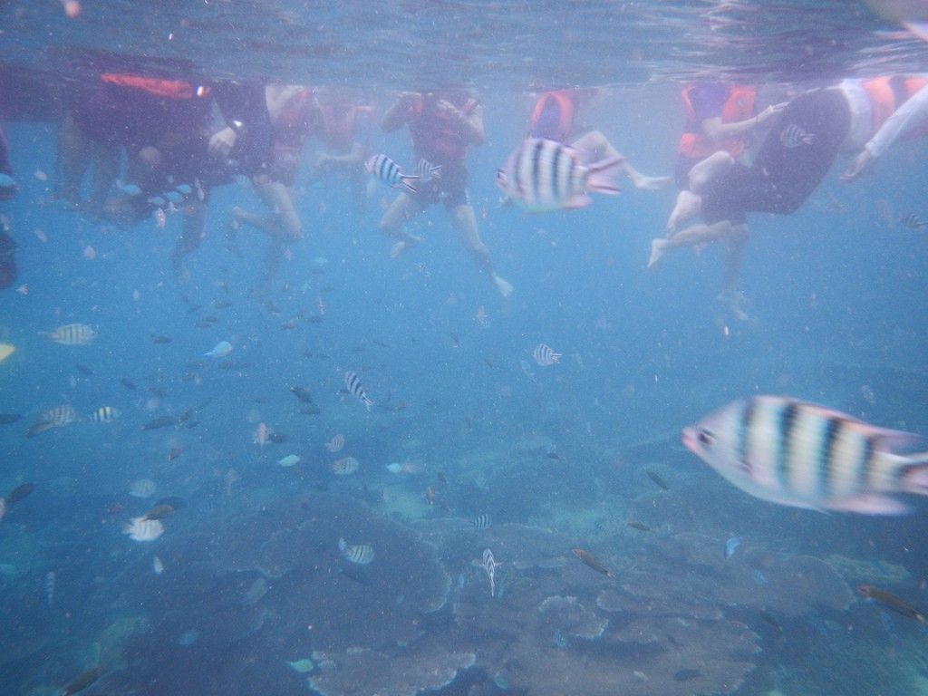 Snorkeling with life jackets