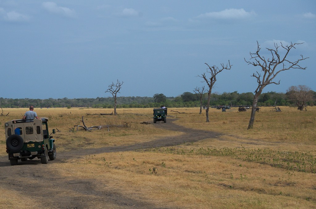 The road to the elephants