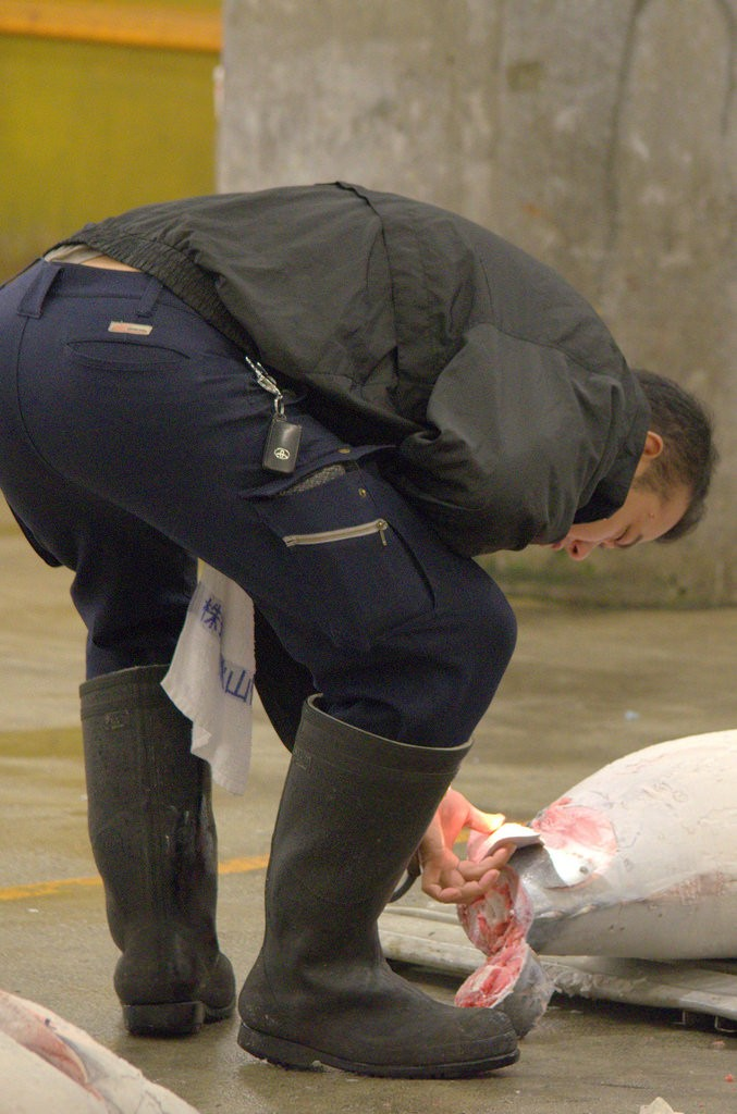 Tsukiji fish market Tuna checking