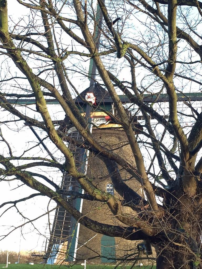 Molen Kinderdijk door een boom