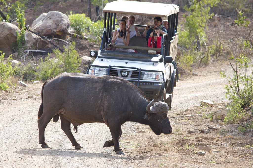 Buffel trek Hluhluwe National Park
