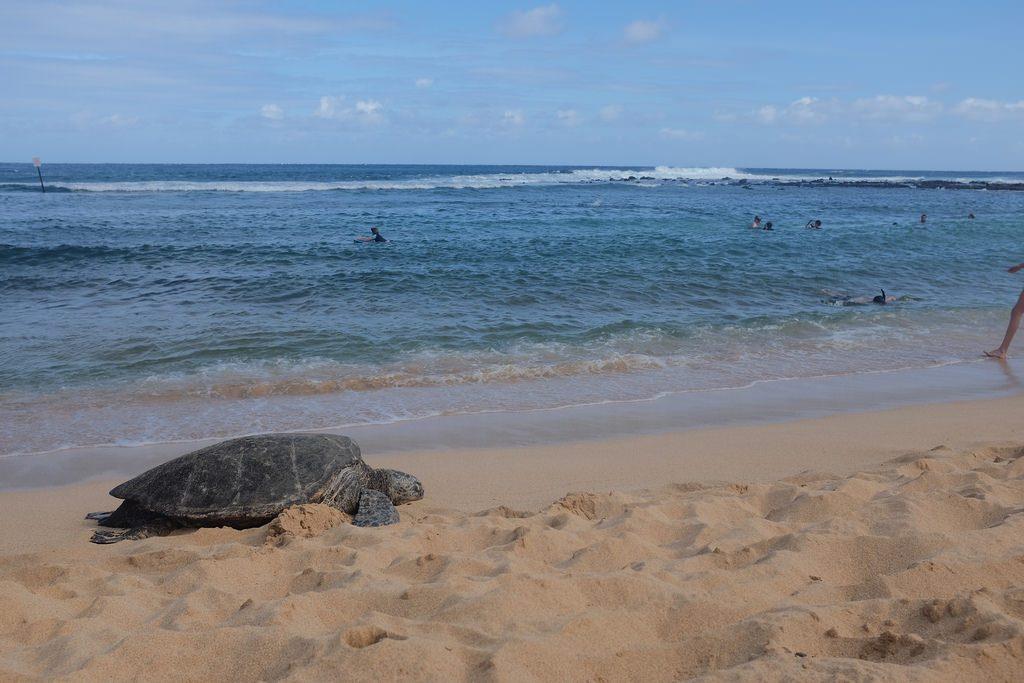 Schildpad Kauai Hawaii