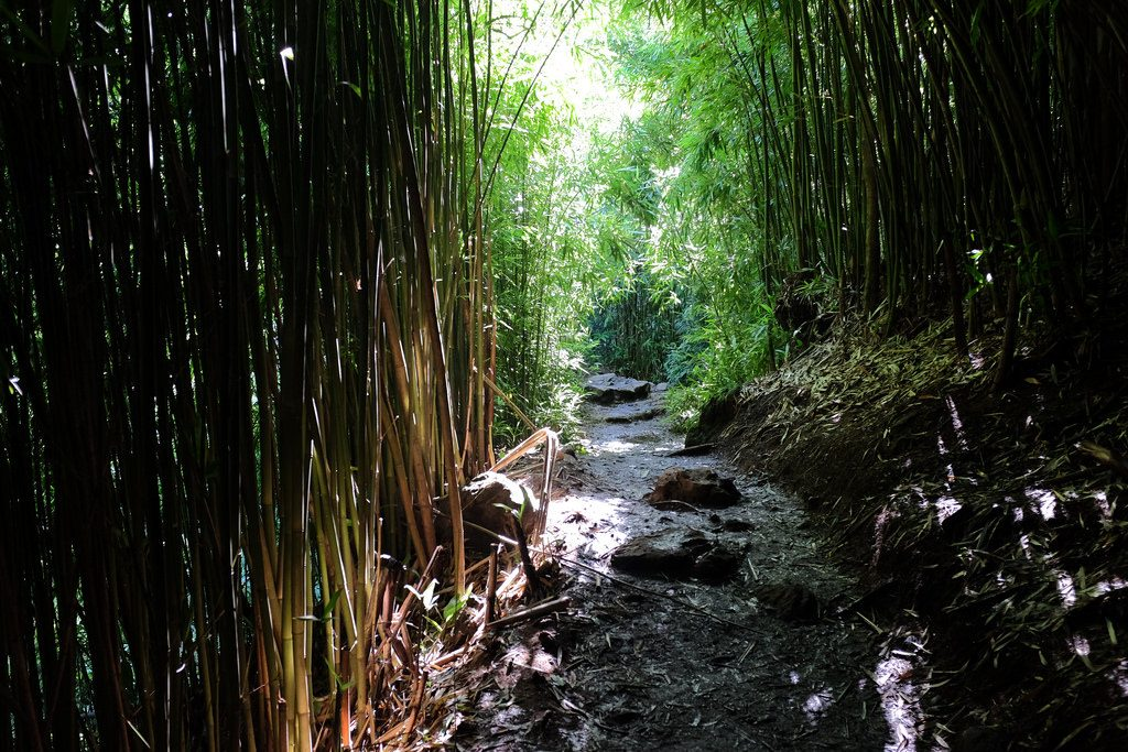 Bamboo Forest Road to Hana Haleakala National Park