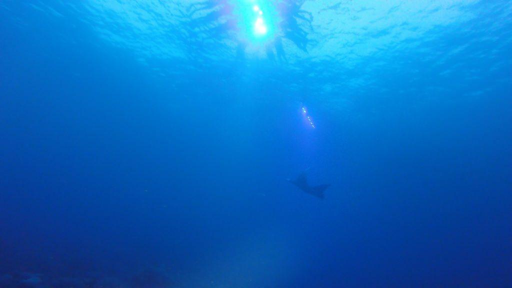 Duiken met manta rays Hawaii