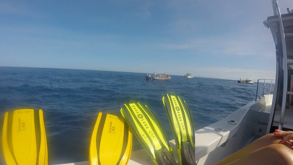 Snorkelen dolfijnen Hawaii Kona Big Island