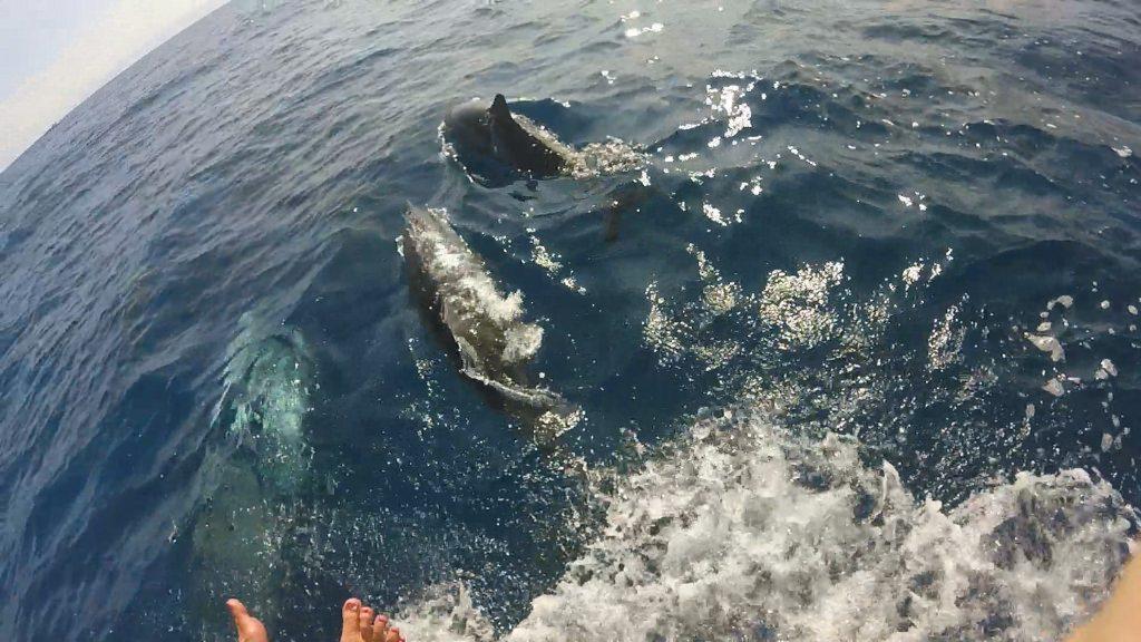 Snorkelen dolfijnen voor de boot