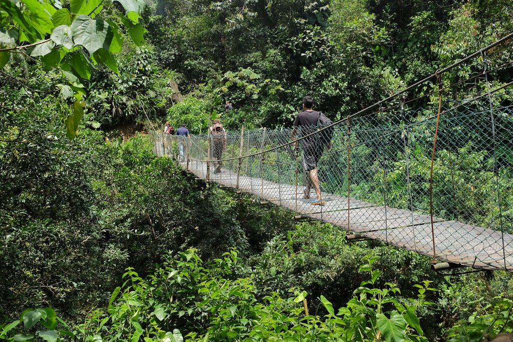 Brug jungle trekking colombia