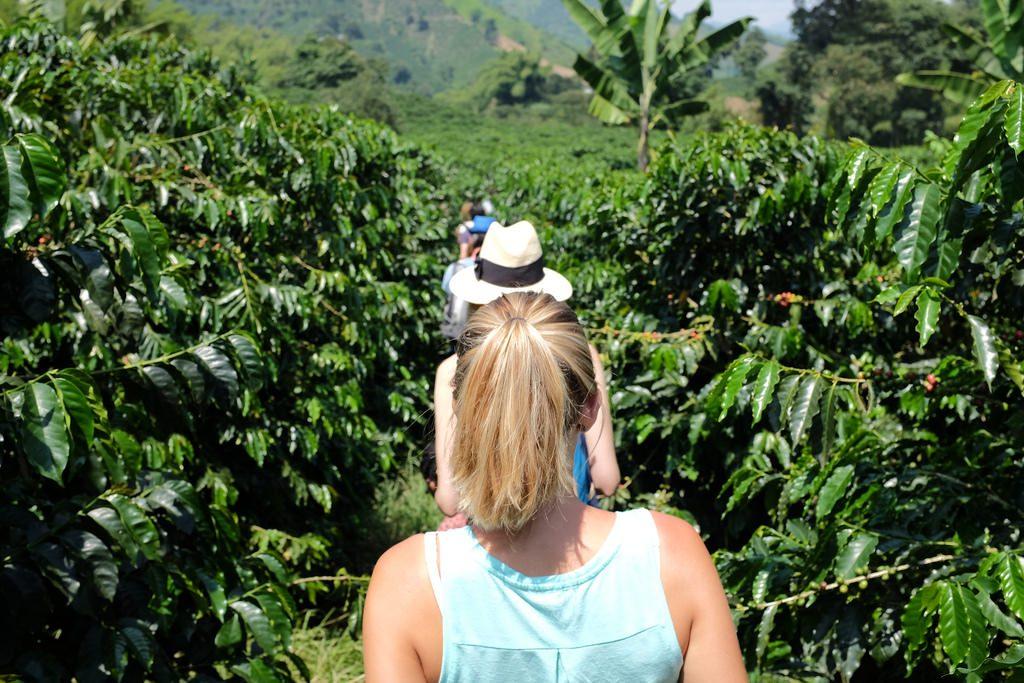 Door de koffievelden Hacienda Venezia Colombia