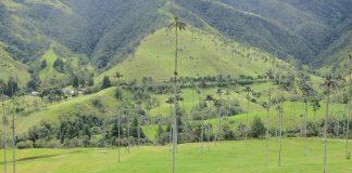 Hoge palmbomen in Colombia Valle de Cocora