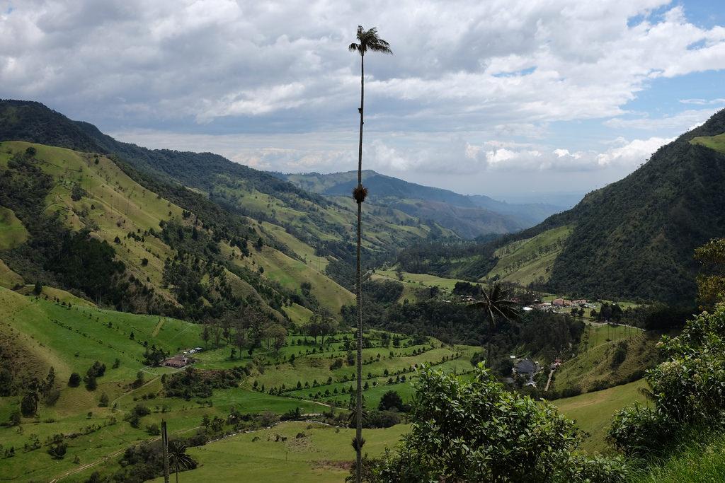 Hoge palmboom Valle de Cocora Colombia