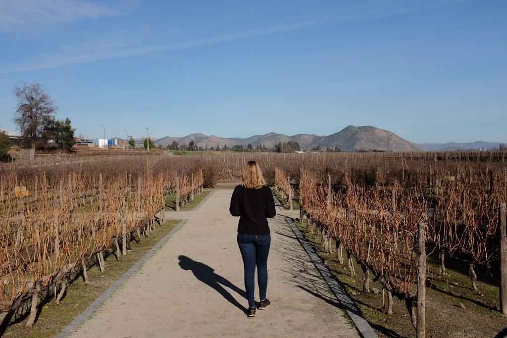Wijnregio van Chili: Concha y Toro