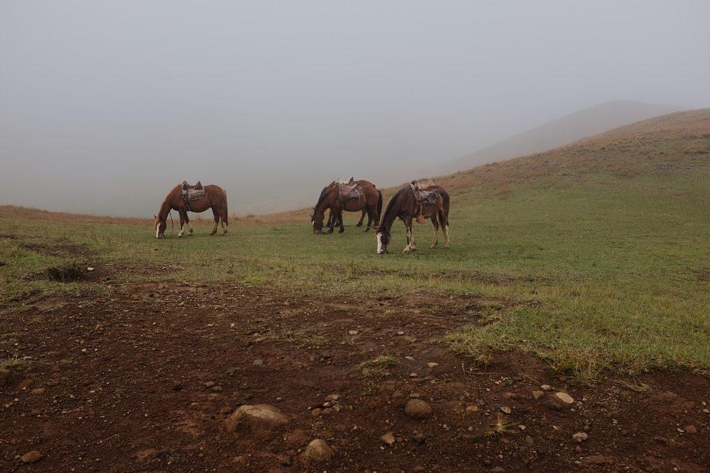 Wilde paarden Paaseiland Maunga Terevaka