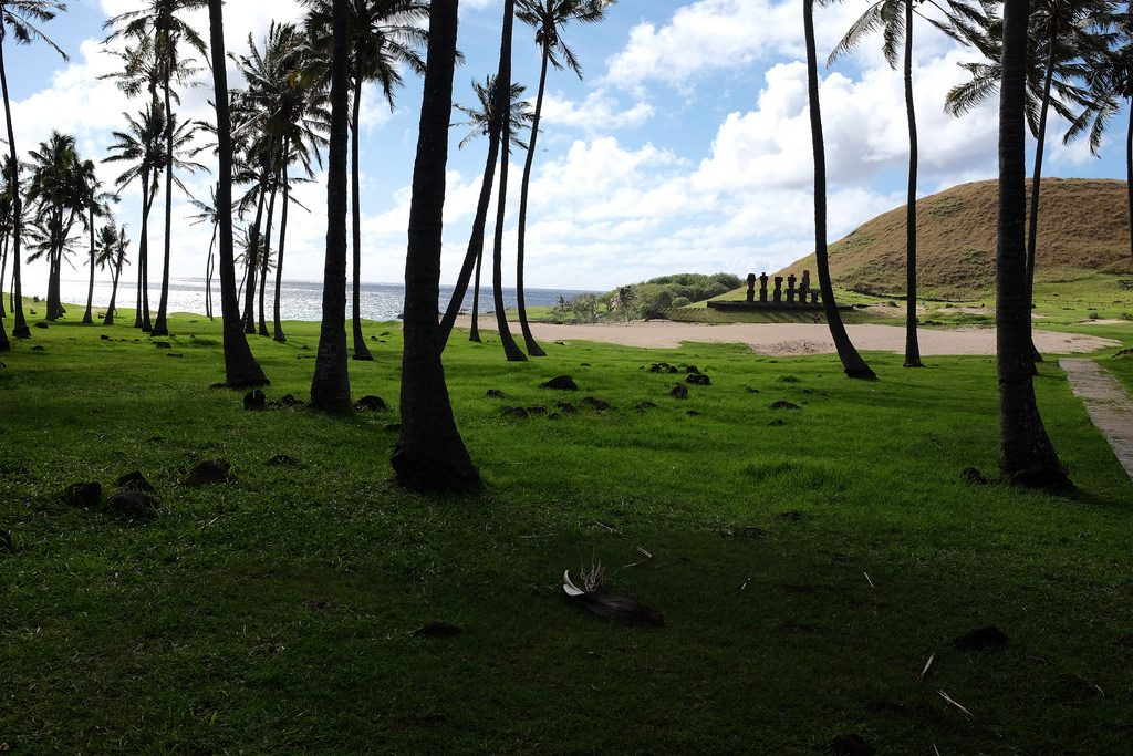 Anakena Beach Paaseiland bezoeken palmbomen