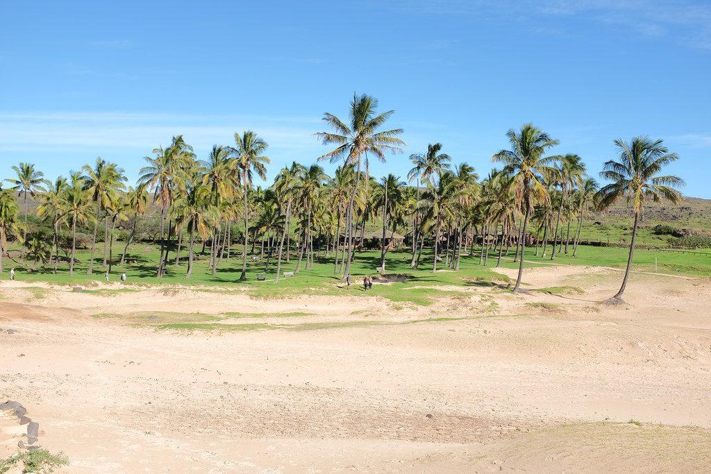 Anakena Beach palmbomen strand
