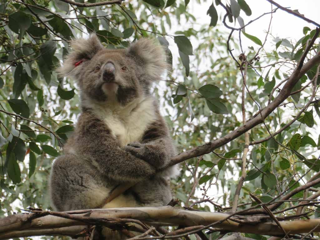 Flinders Chase National Park Kangaroo Island Australie