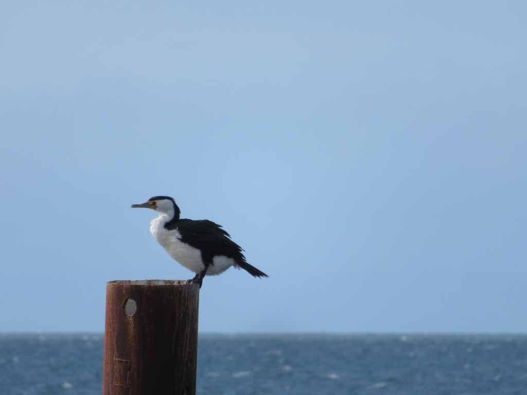 Kingscote Kangaroo Island Australie