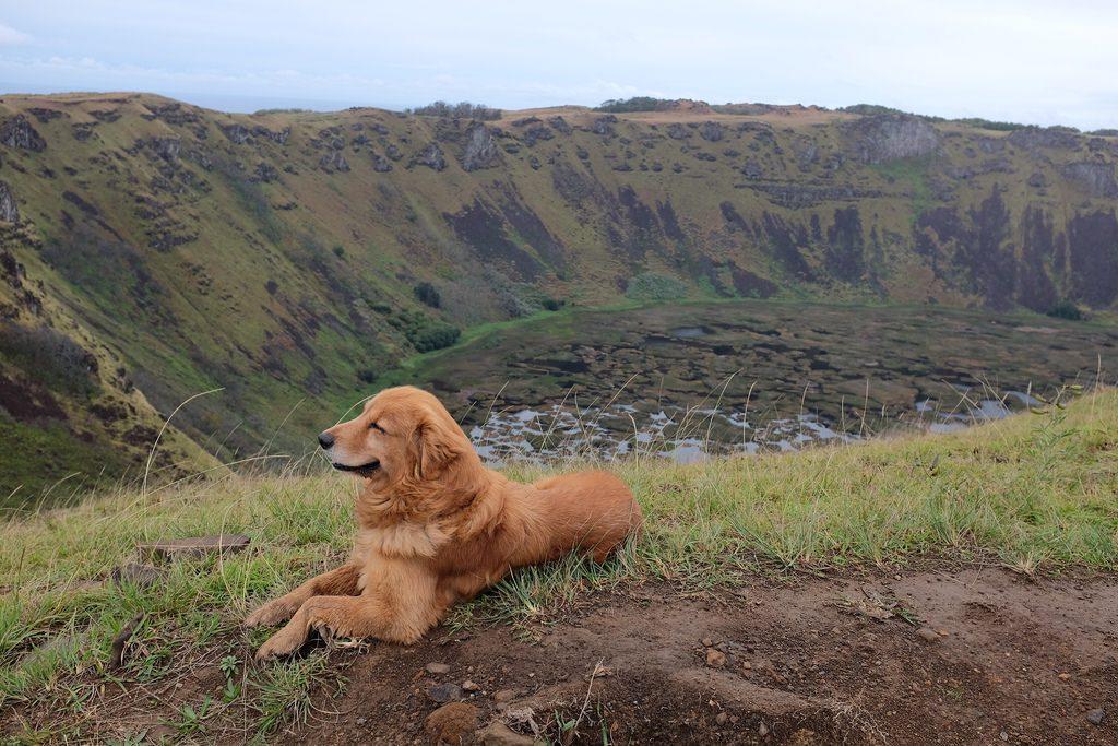 Orongo krater met hond Paaseiland