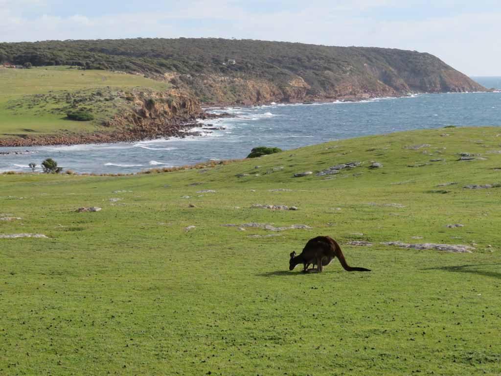 Stokes Bay om Kangoeroes te spotten in Australie