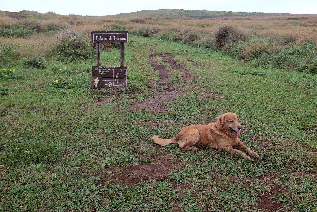 Wandelen op Paaseiland met hond