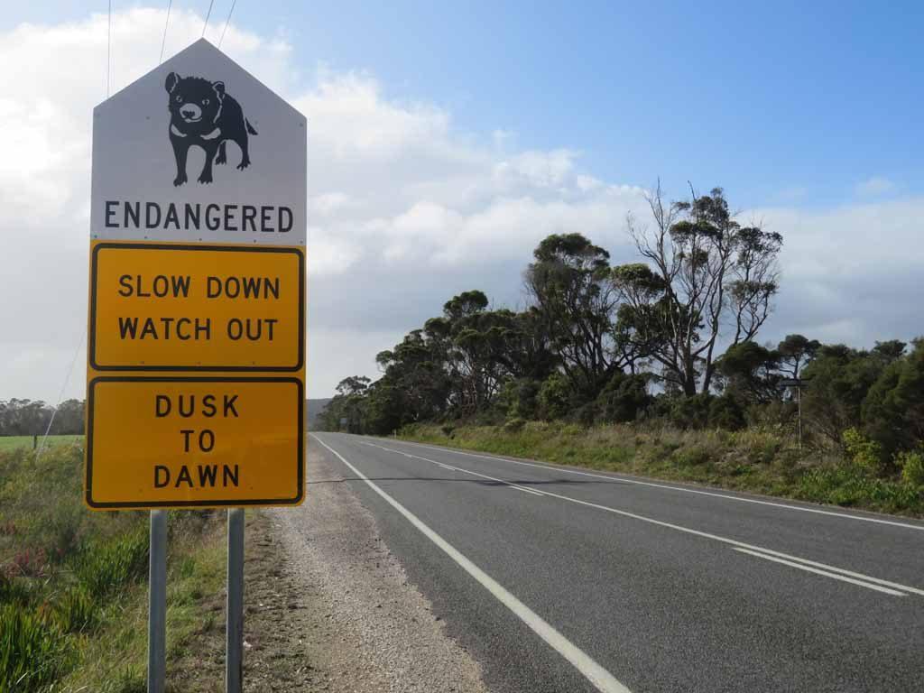 Top 10 dieren op eiland Tasmanië Van vogelbekdier tot Tasmaanse duivel