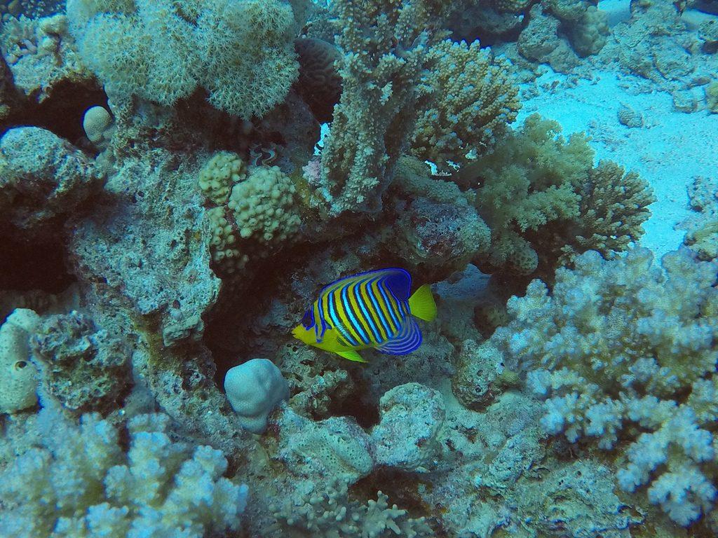 Kleurrijke vis in de Rode Zee
