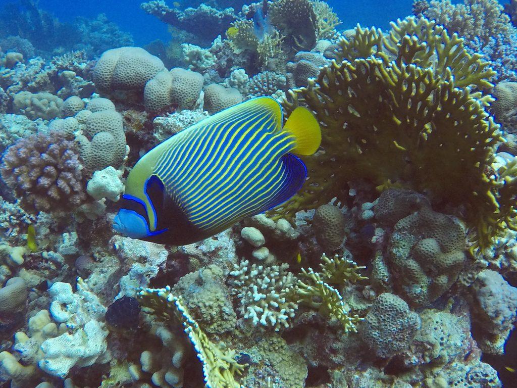 Kleurrijke vis in de Rode Zee Hurghada Egypte