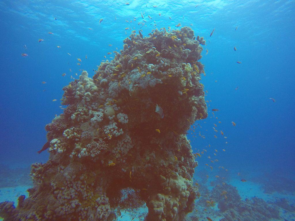 Pilaar van koraal in de Rode Zee duiken