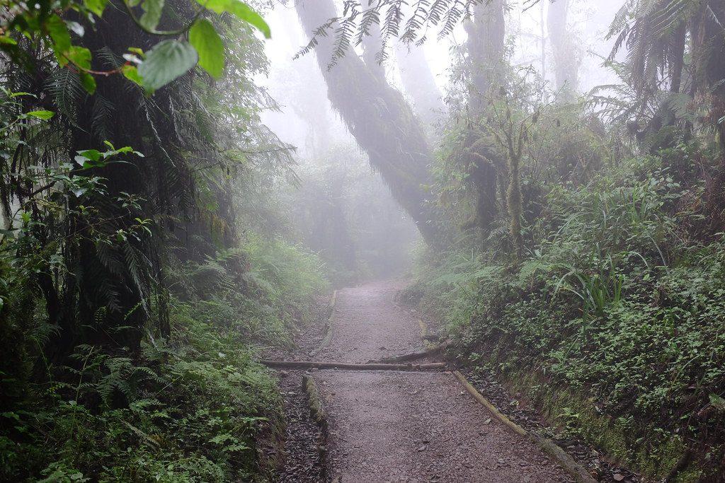 Dag 1 van de beklimming door het mistige bos