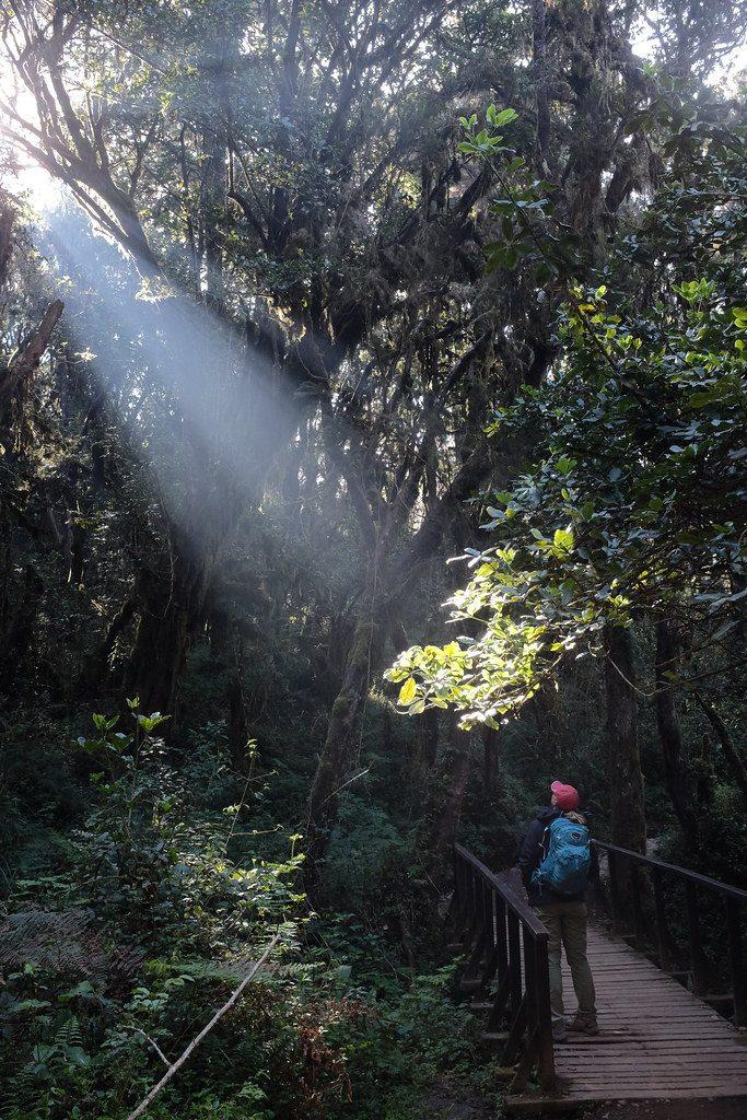 Zonnestraal in het bos Kilimanjaro