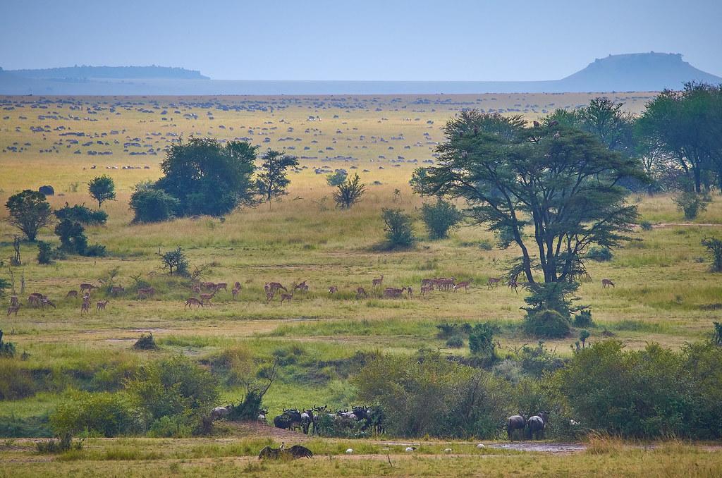 Serengeti Tanzania ervaring uitgestrekte vlakte