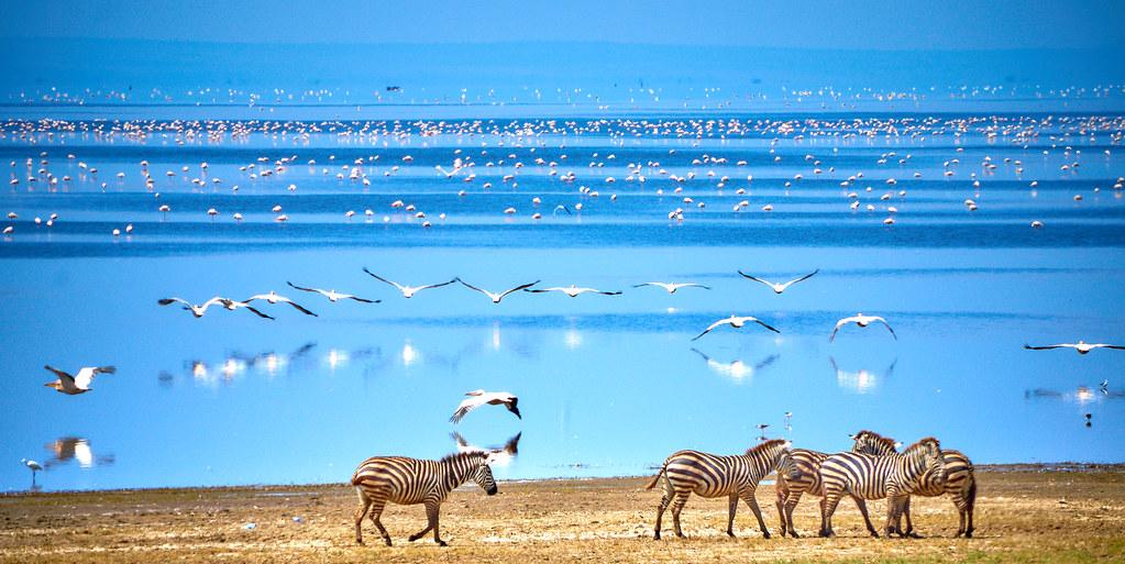 Lake Manyara Tanzania - Zebra's en vogels bij het meer in wildpark tanzania