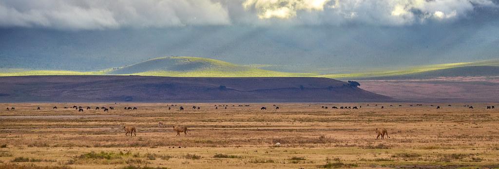 Ngorongoro krater panorama - Wildpark Tanzania safari ervaring