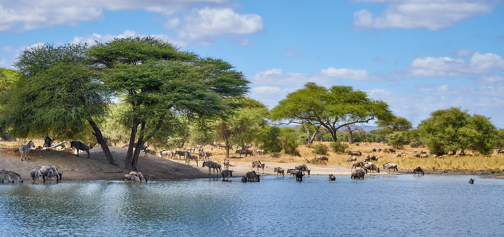 Tarangire wildpark Tanzania - Panorama