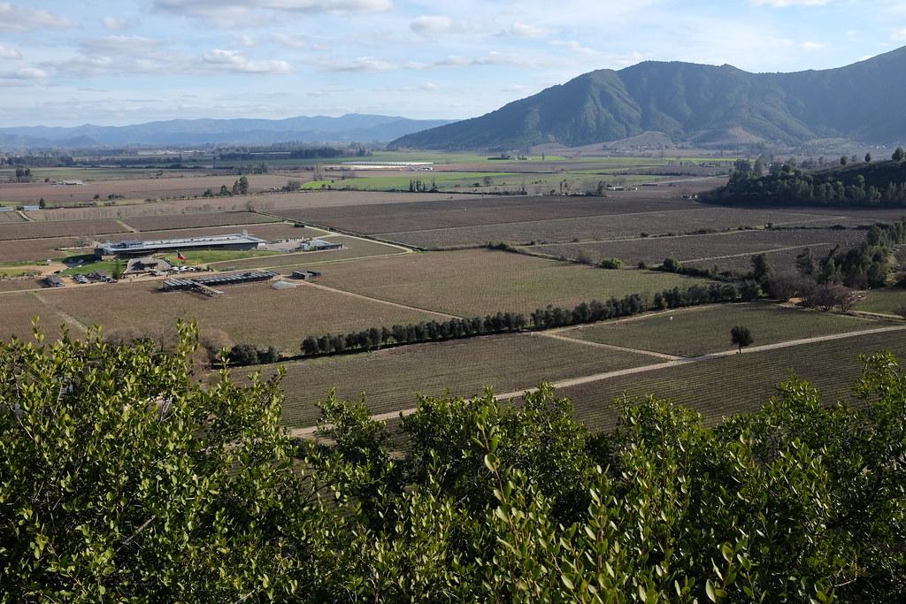 Wijnregio Chili: Montes