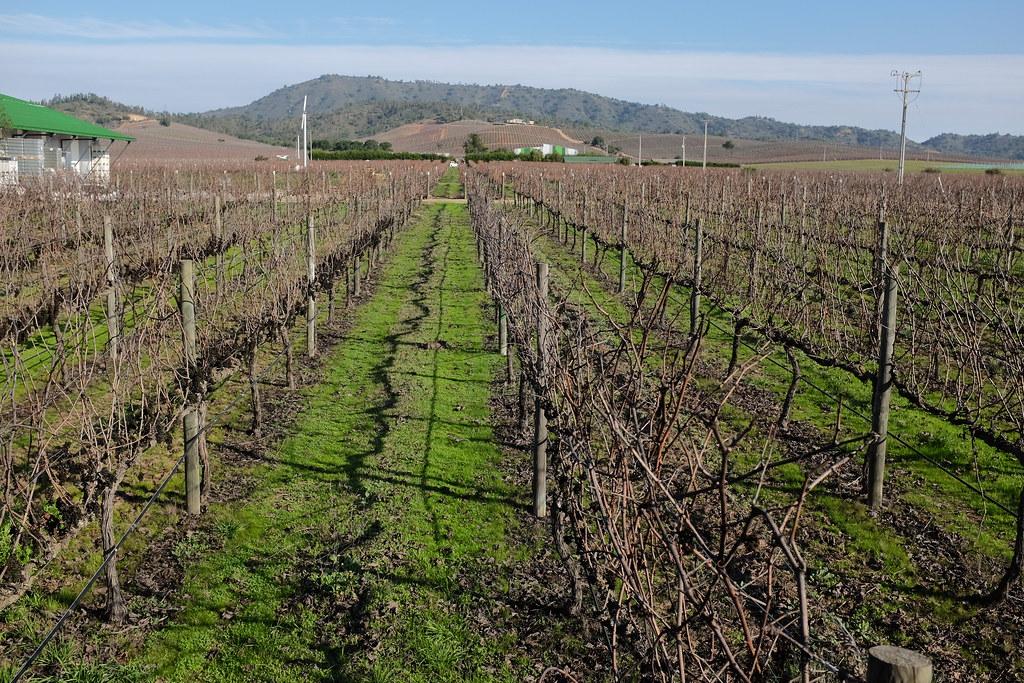 Wijnvelden bij Casablanca Valley in wijnregio chili