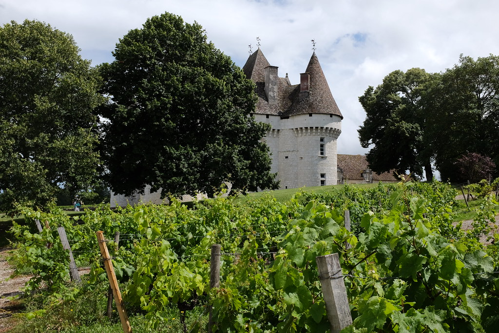 Druivenvelden op Chateau Monbazillac